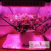 Full Spectrum LED Grow Light 165W with 3W