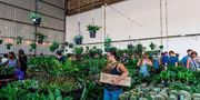 Canberra - Huge Indoor Plant Warehouse Sale - Rumble in the Jungle